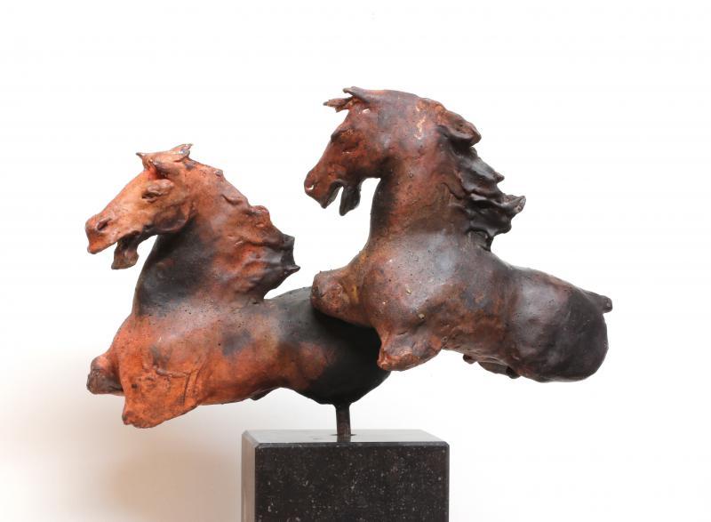 Hoofdfoto Camargue Horses